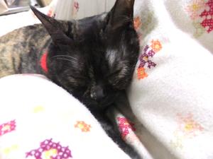 おネコと読書2