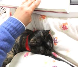 おネコと読書1