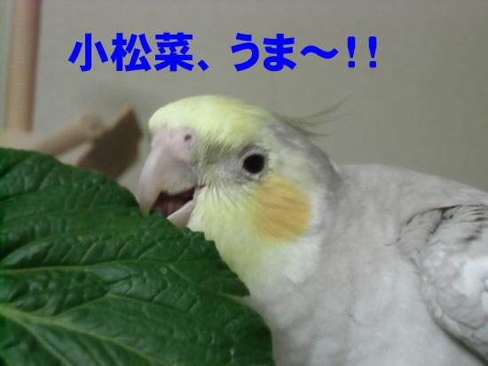 小松菜旨~!!