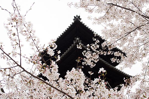 桜風景5-1