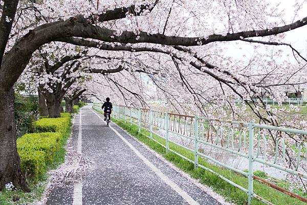 桜風景5-3