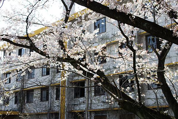 桜風景5-7