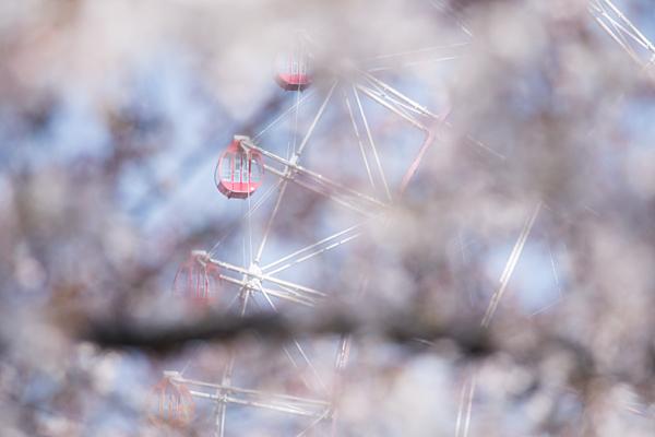 桜風景5-8