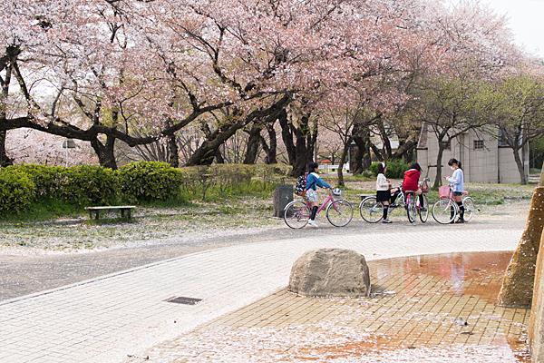 桜風景6-6