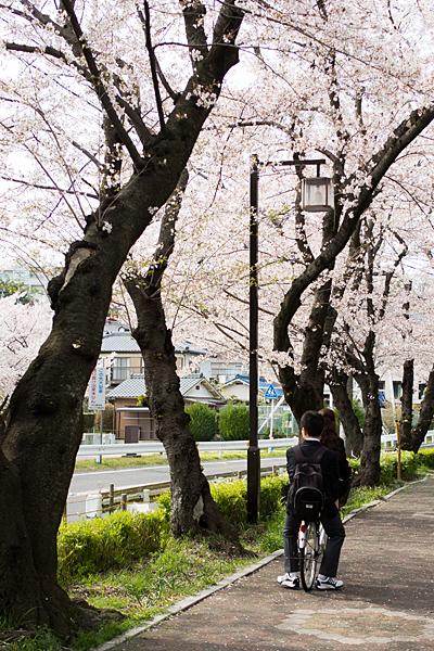 桜風景6-9