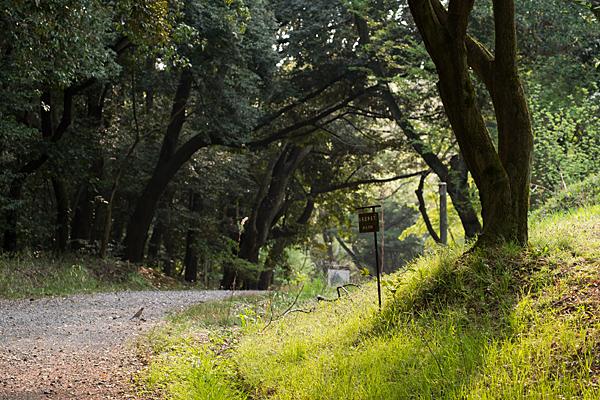 森林公園-11