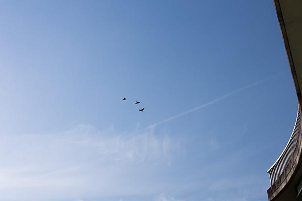 鳥風景-10