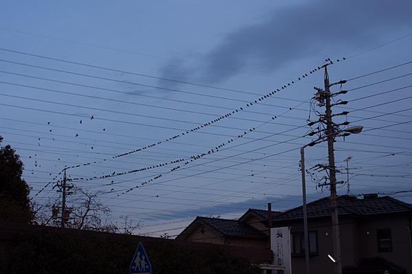 鳥風景-13