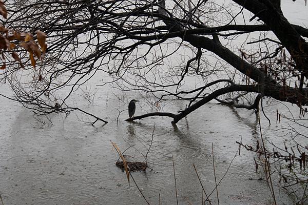 雨の大森-11
