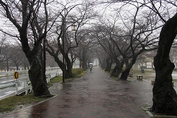 雨の大森-9