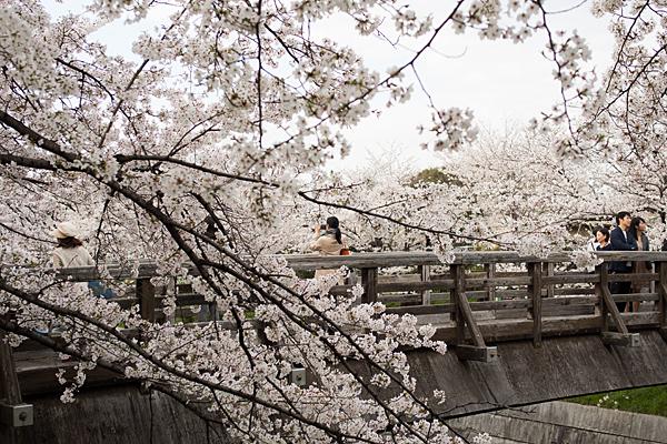 桜風景3-3