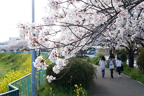 桜風景3-4