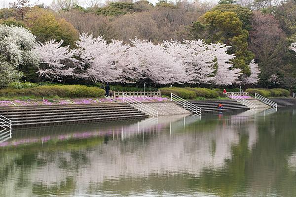 桜風景3-8