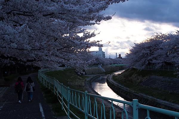 桜風景4-12