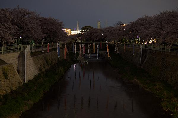 桜風景4-13