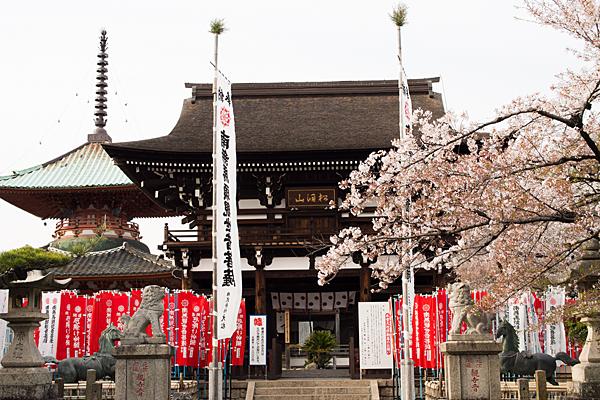 桜風景4-6