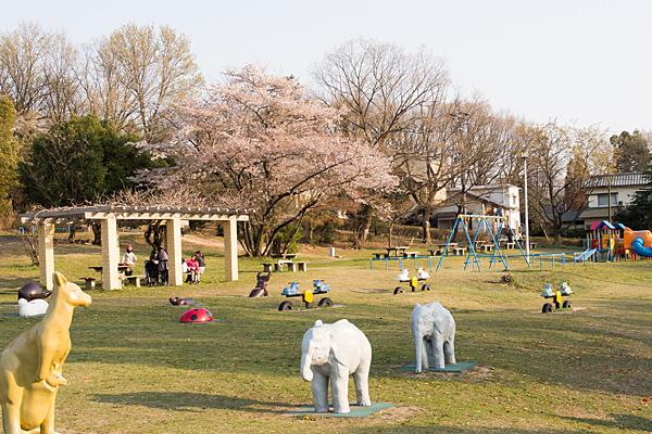 桜風景4-8