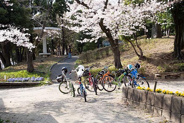 桜風景2-5