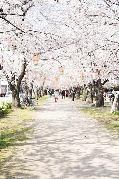 桜風景2-7