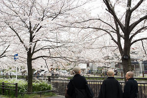桜風景2-8