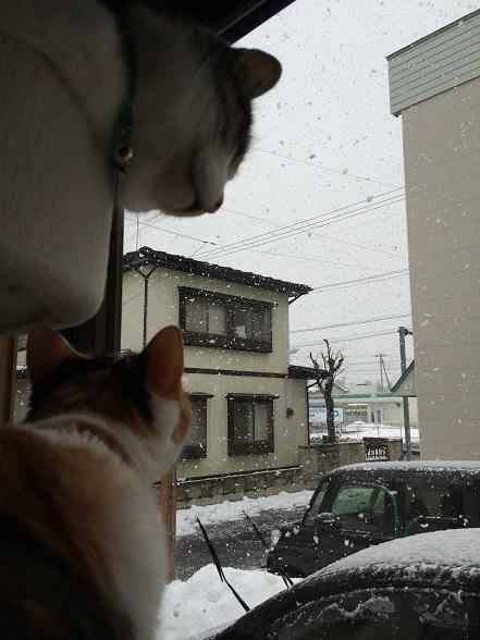 012雪と猫