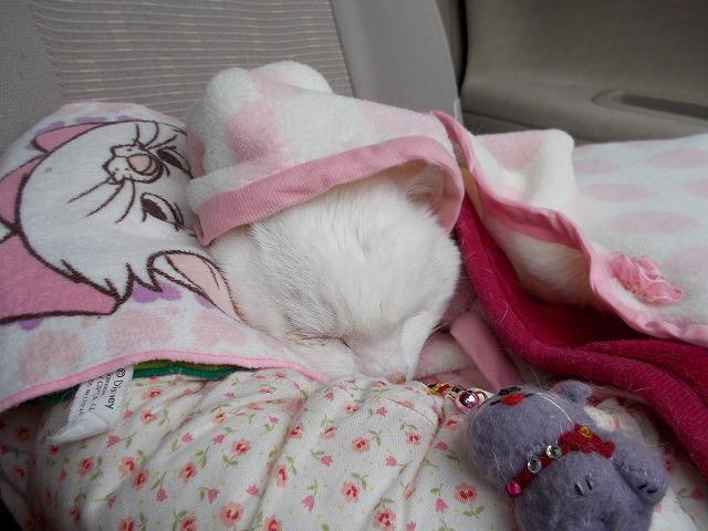 マンマ 今日は寒かね~