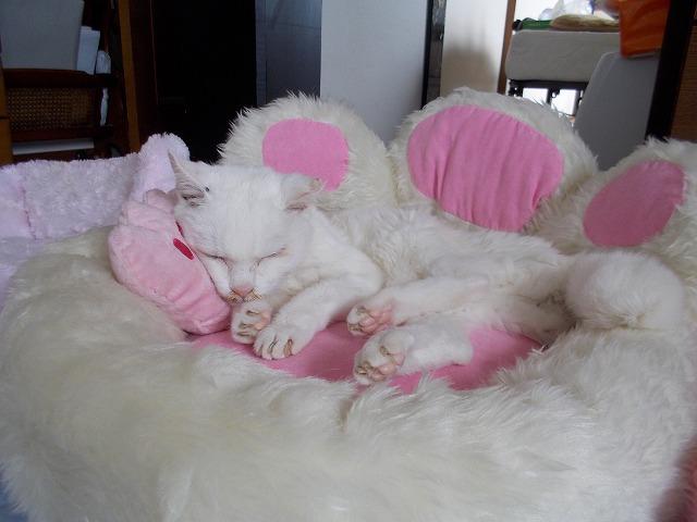 小枕もついとると
