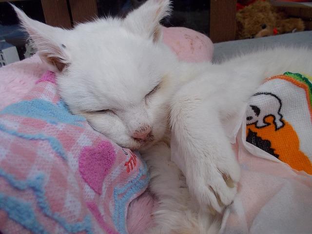 あいちゃんは、 眠かとよ~