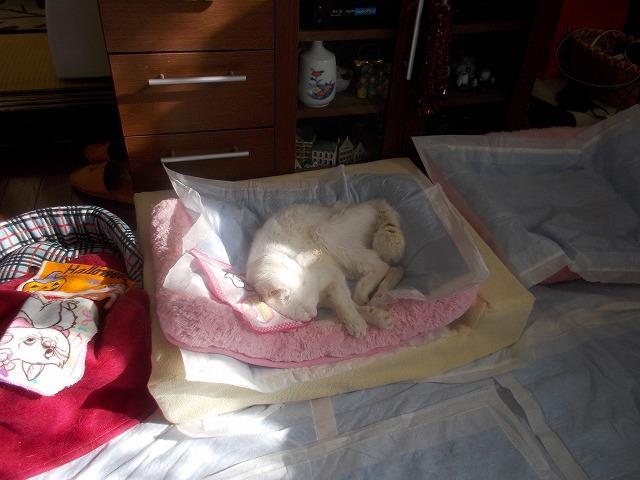 あいちゃんベッドにお日さま
