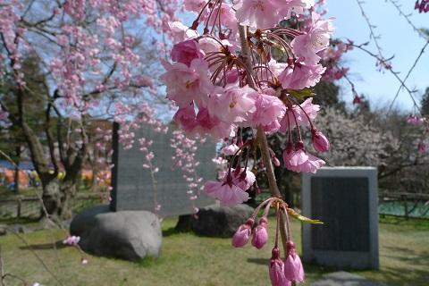 鶴岡公園06
