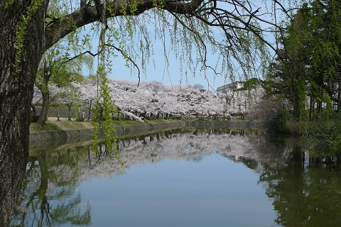 鶴岡公園09