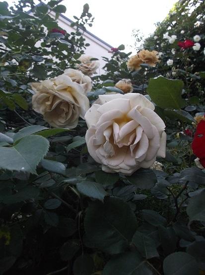 花1847