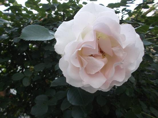 花1838