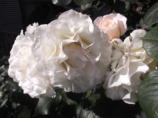 花1906