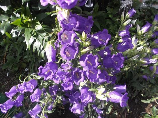 花1905