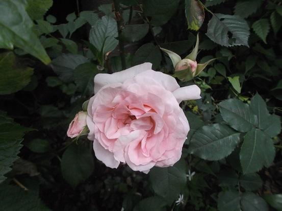 花1911
