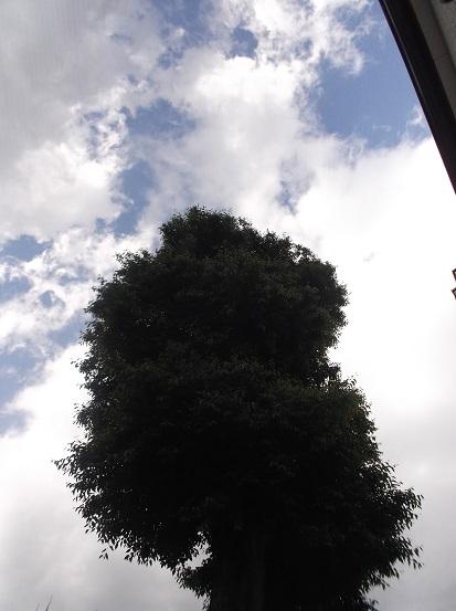 樹1901