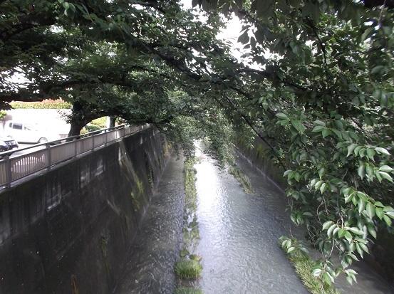 石神井2005