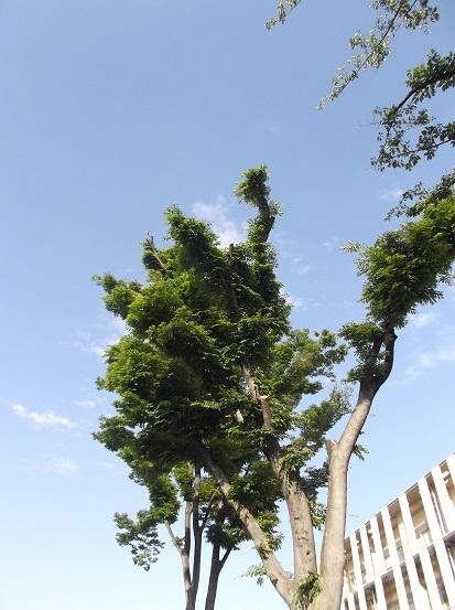 樹2067
