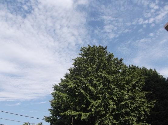 樹2290