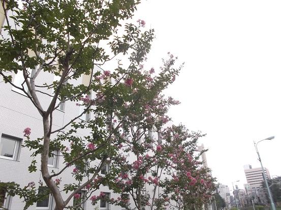 樹2266