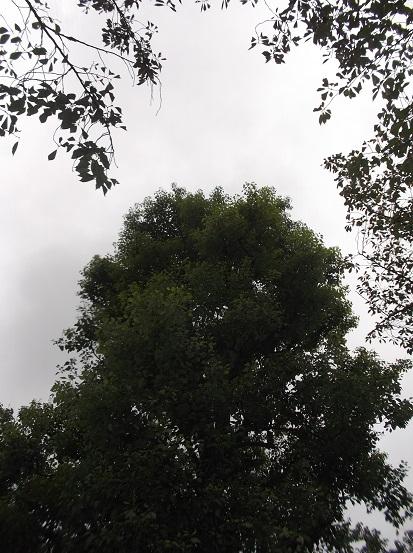 樹2333