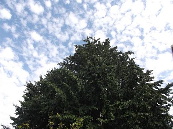 樹2383