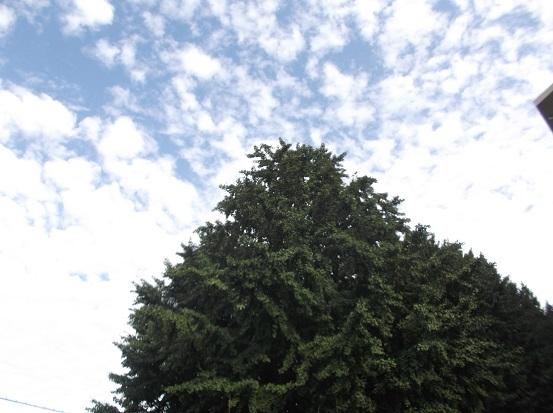 樹2381