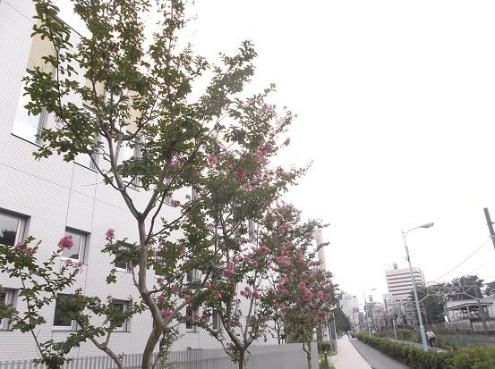 樹2265