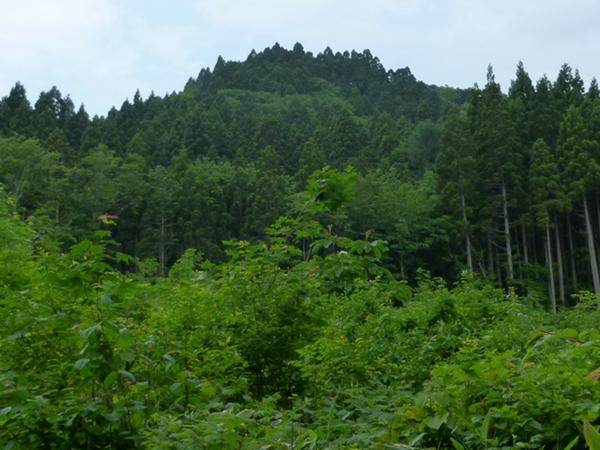 Shirihachi Residence
