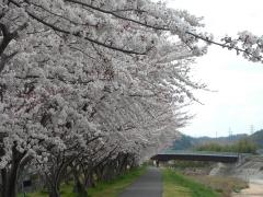 asakegawa.jpg