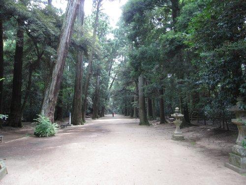 11鹿島神宮森