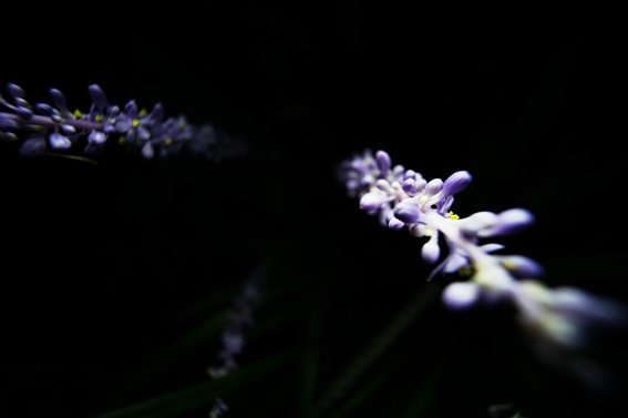 12mm9.jpg