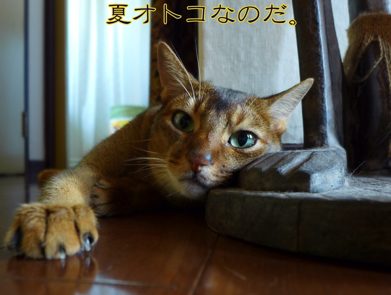 ヨッ!夏オトコ!